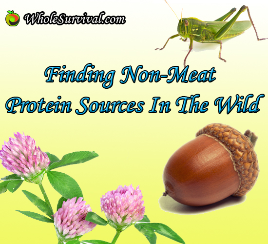 Protein Foraging
